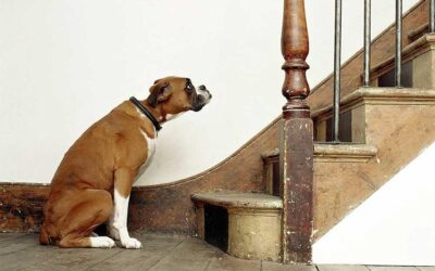 Is your pet living with pain?