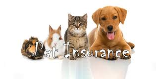 To insure or not to insure? That is the question!